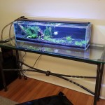 100 Gallon Acrylic Saltwater Aquarium