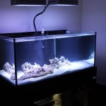 100 Gallon Aquarium Dimensions