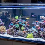 100 Gallon Aquarium Size