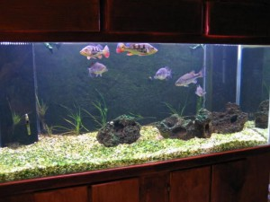 100 Gallon Aquarium Sump