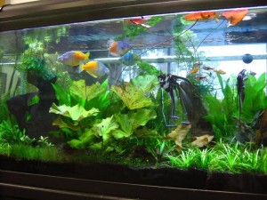 100 Gallon Aquarium Tank