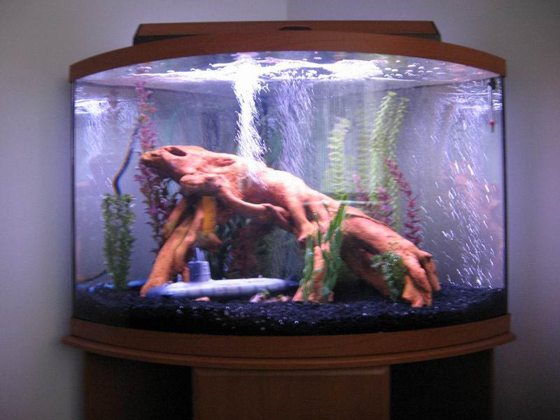 100 gallon aquarium dimensions pictures to pin on for 55 gallon corner fish tank
