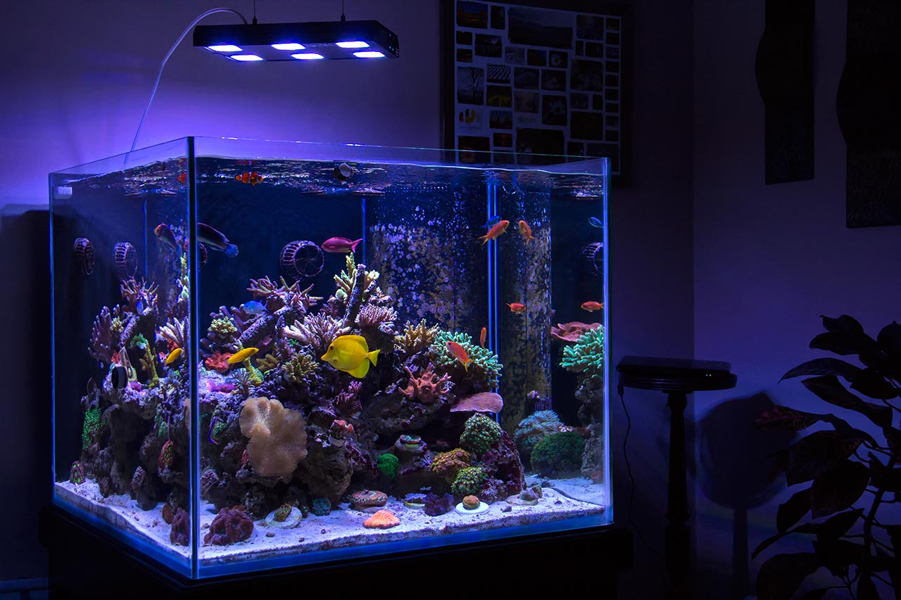 100 Gallon Marineland Aquarium