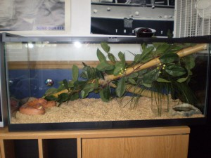 100 Gallon Reptile Aquarium