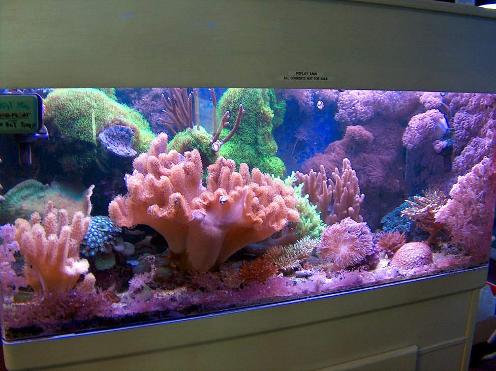 100 Gallon Saltwater Aquarium