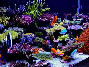 100 Gallon Saltwater Aquariums