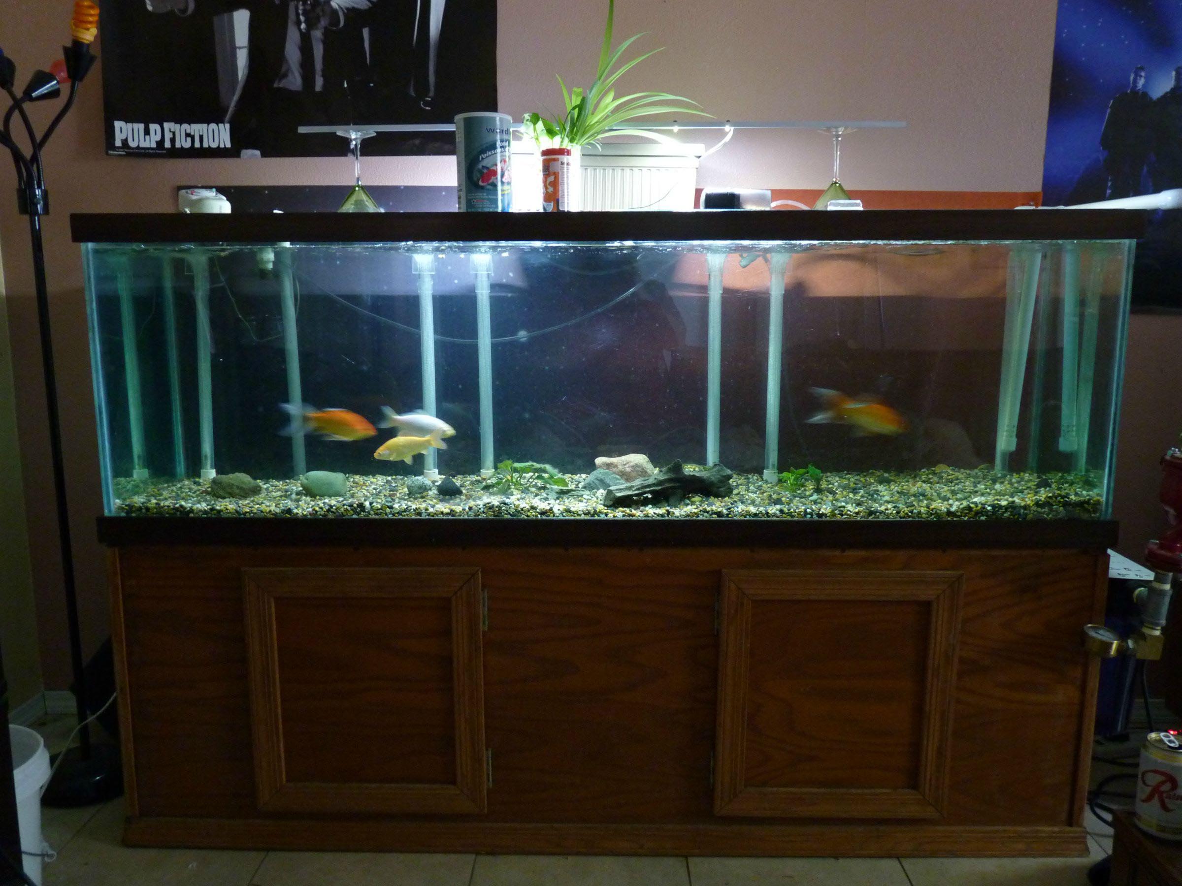 100 Gallons Aquarium Size