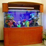 120 Gallon Glass Aquarium