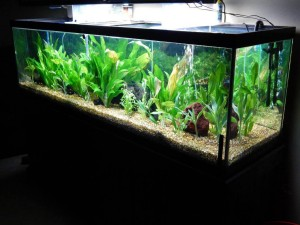 125 Gallon Glass Aquarium