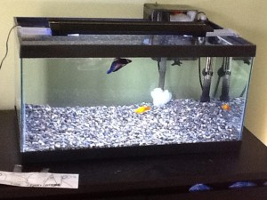 15 Gallon Glass Aquarium