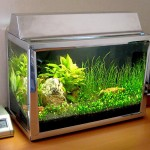 2.5 Gallon Glass Aquarium