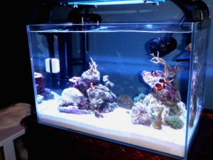 20 Gallon Glass Aquarium