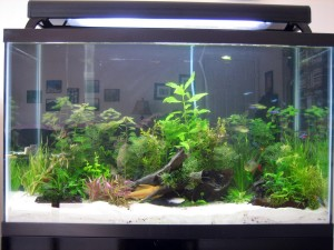 29 Gallon Glass Aquarium