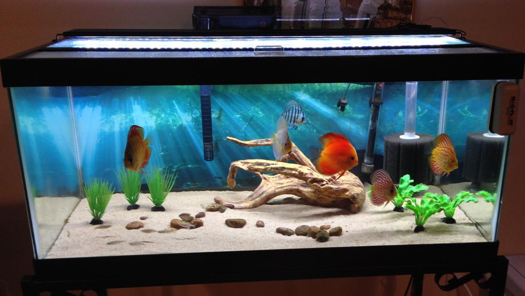 30 Gallon Aquarium Fish Suggestions