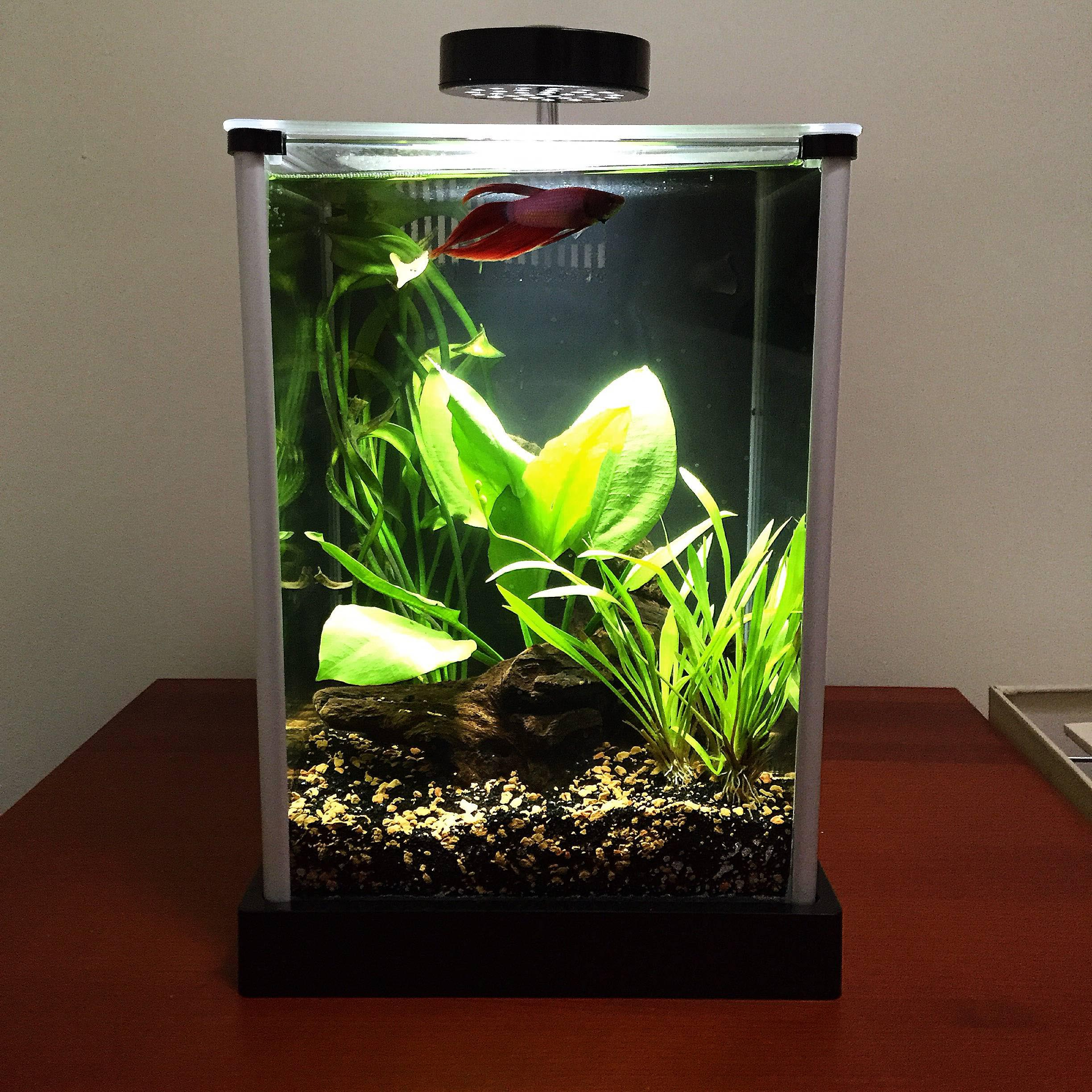 30 gallon aquarium heater aquarium design ideas