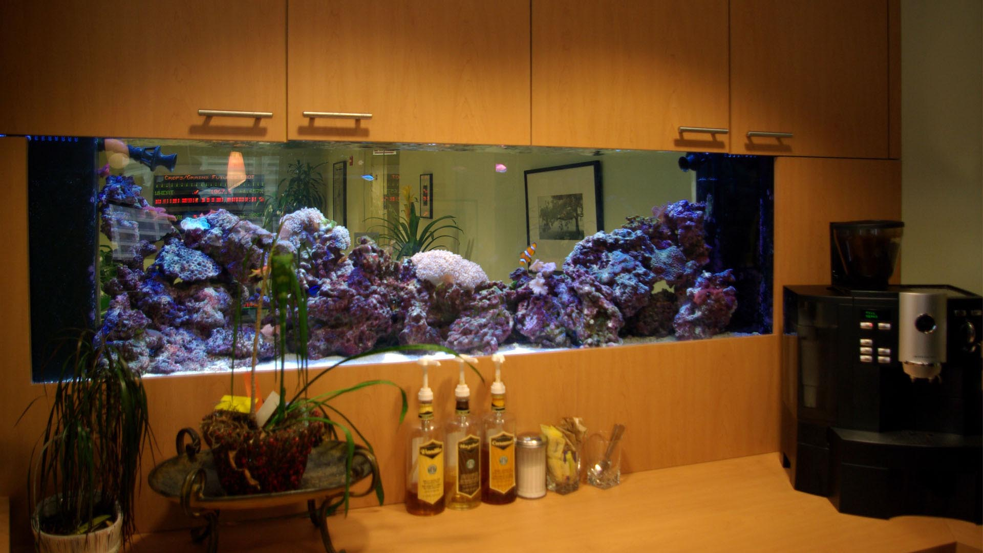 30 gallon aquarium size aquarium design ideas Thirty gallon fish tank