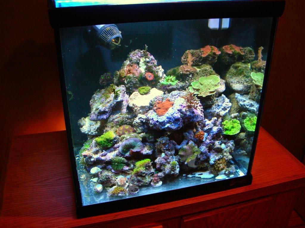 30 Gallon Extra High Aquarium