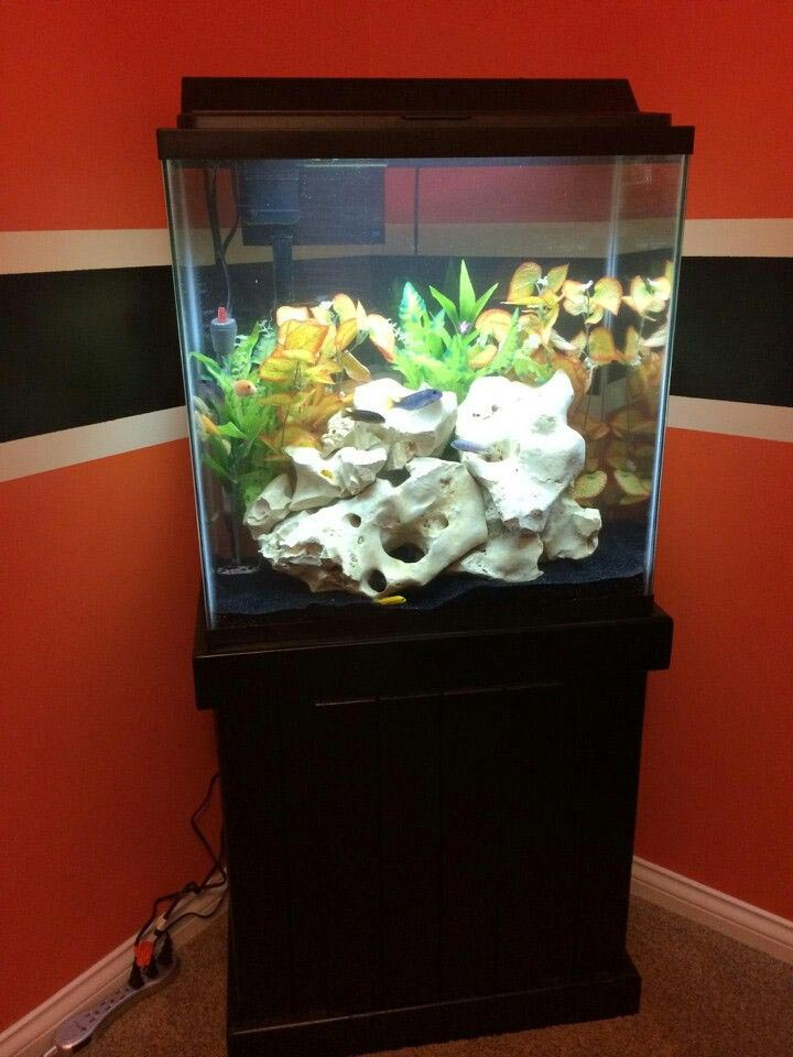 30 gallon fish aquarium aquarium design ideas for 20 gallon fish tank size