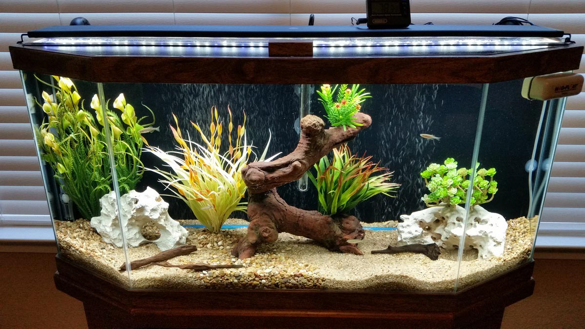 30 gallon freshwater aquarium setup aquarium design ideas