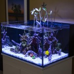 30 Gallon High Aquarium Dimensions