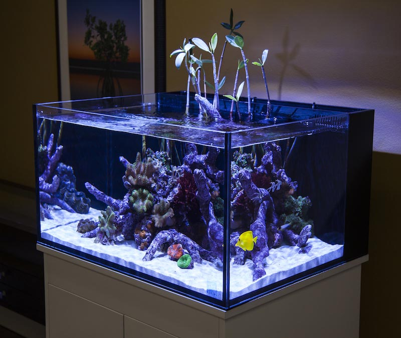 30 gallon high aquarium dimensions aquarium design ideas for 50 gallon fish tank dimensions