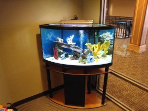 30 Gallon Long Aquarium Stand