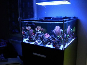 30 Gallon Marine Aquarium