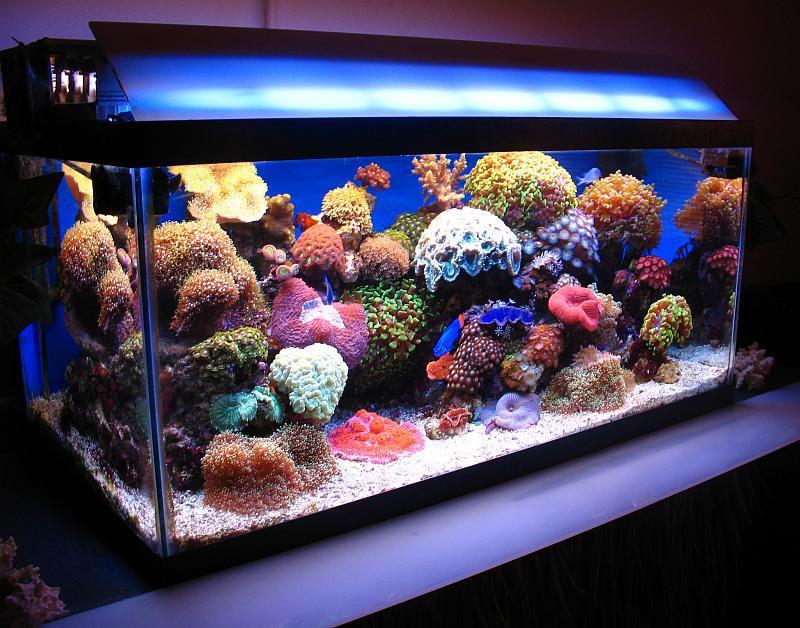 30 gallon marine aquarium setup aquarium design ideas. Black Bedroom Furniture Sets. Home Design Ideas