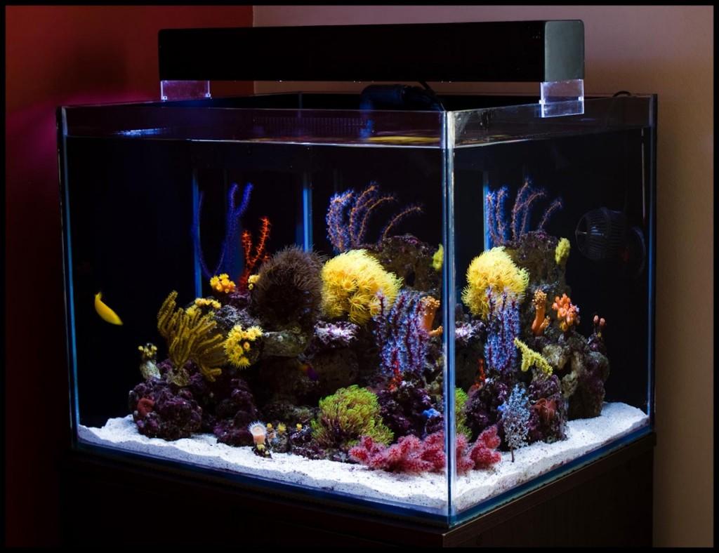 30 Gallon Reef Aquarium
