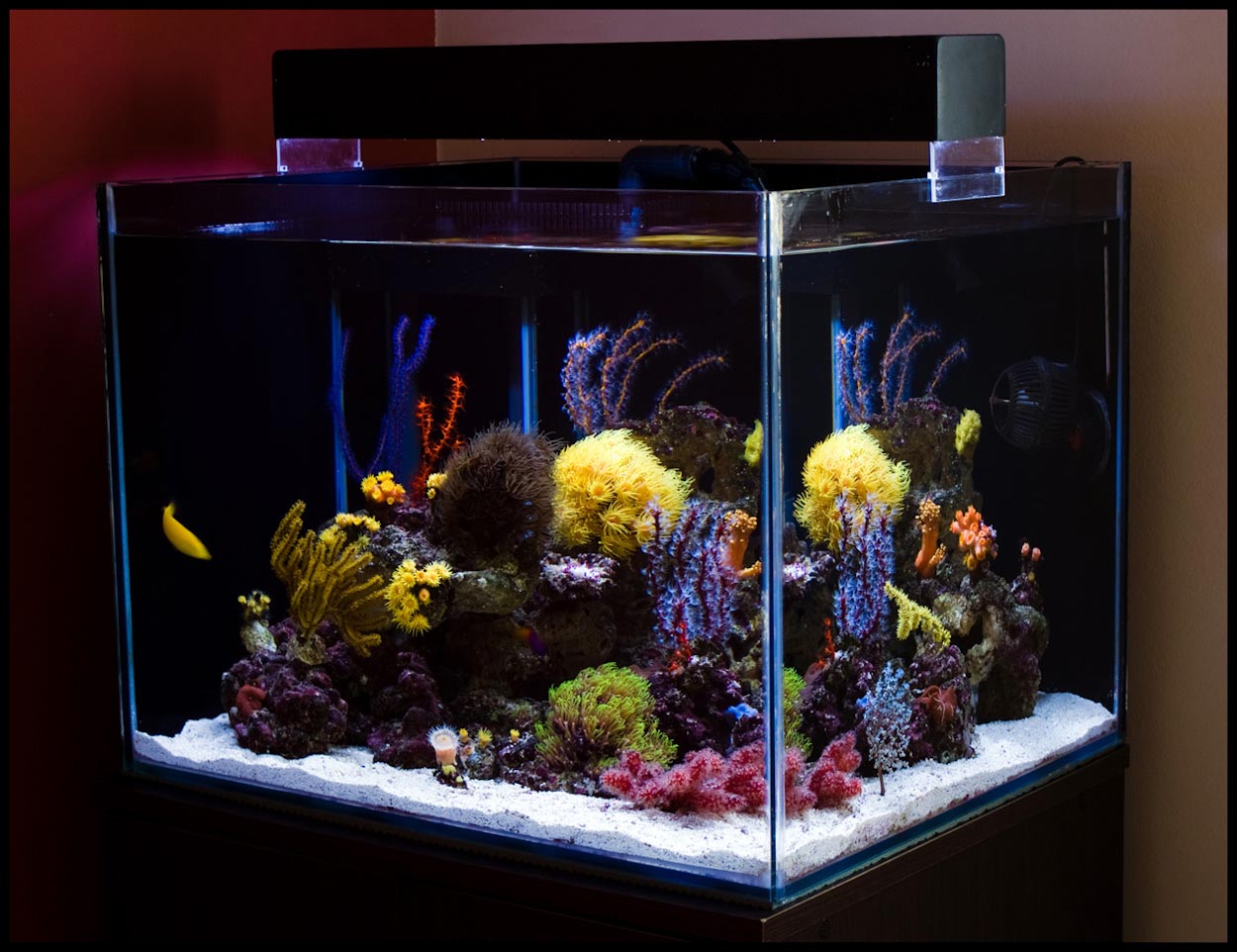 30 Gallon Reef Aquarium