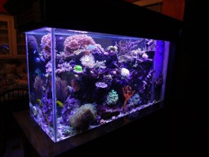 30 Gallon Saltwater Aquarium Kit