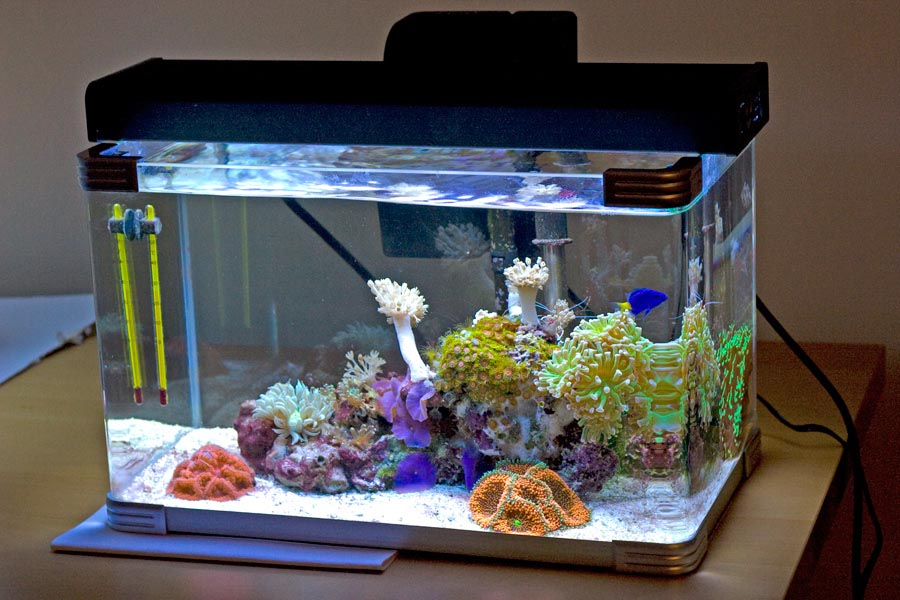30 gallon saltwater aquarium setup aquarium design ideas for 10 gallon fish tank heater