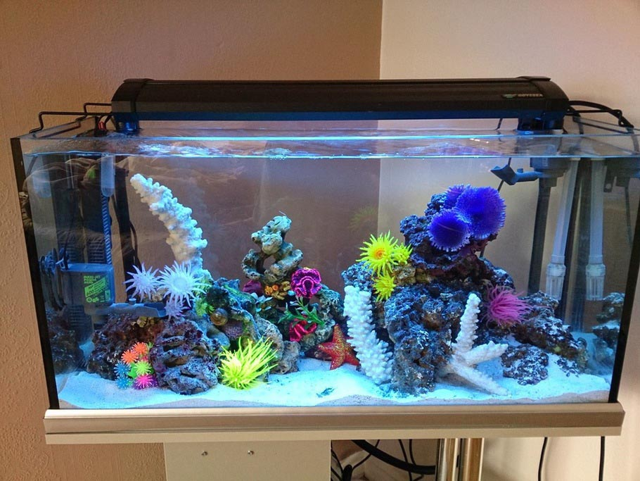 30 Gallon Saltwater Aquarium