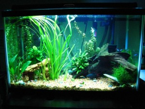 30 Gallon Tall Aquarium