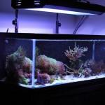 30 Gallon Tall Aquarium Dimensions