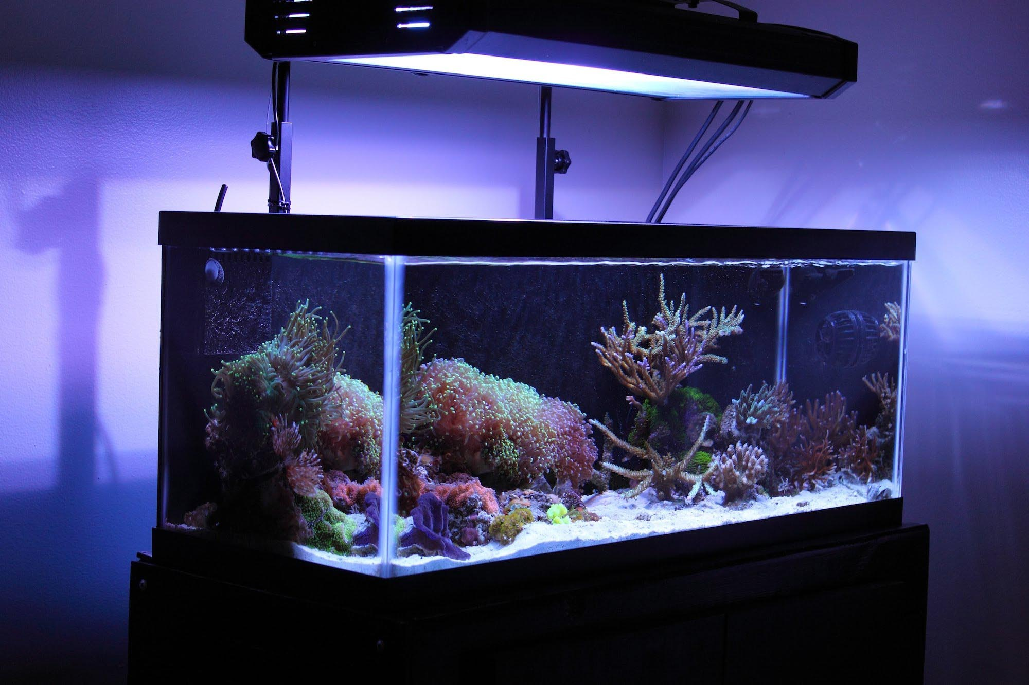 30 Gallon Tall Aquarium Dimensions Aquarium Design Ideas