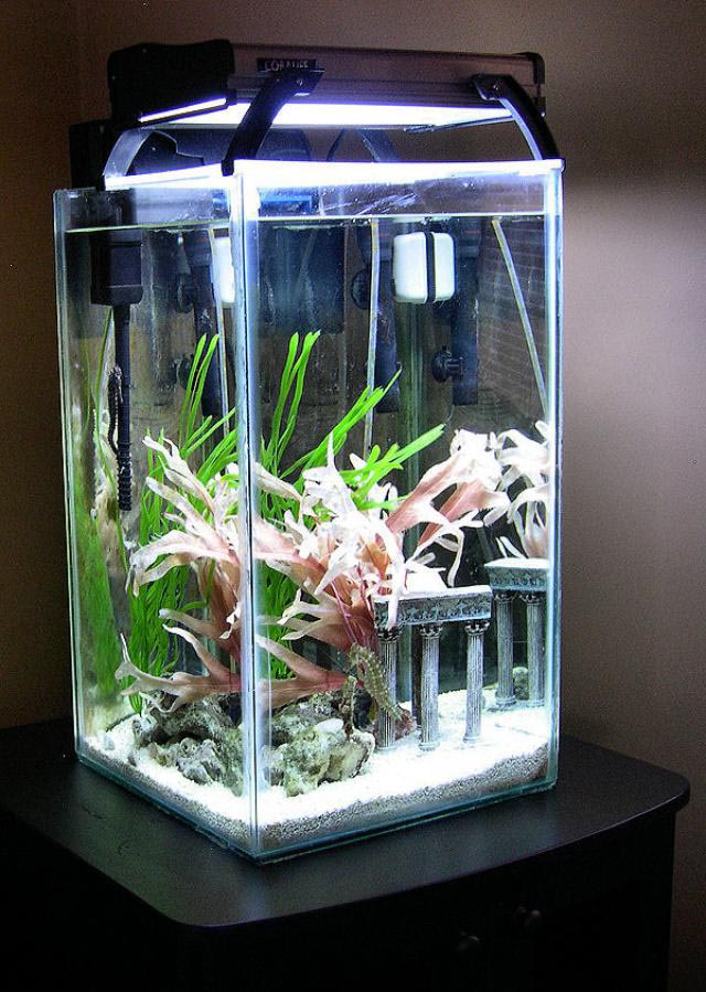 30 gallon x high aquarium aquarium design ideas for 5 gallon glass fish tank