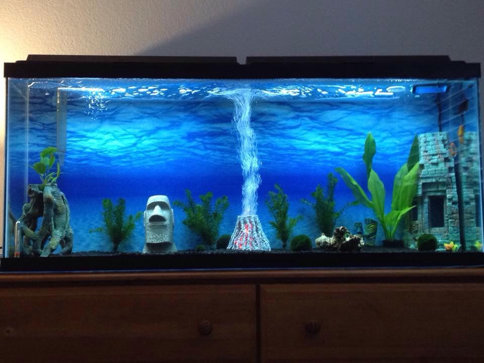 how to properly set up a 20 gallon fish tank