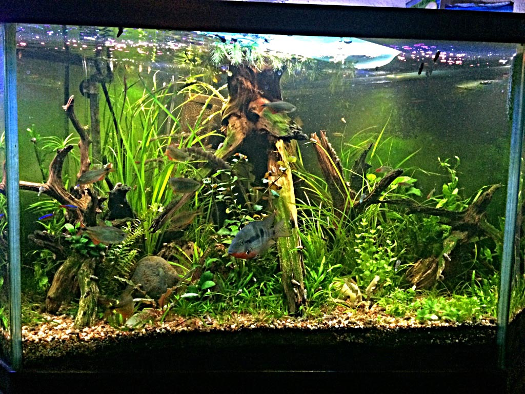 60 Gallon Glass Aquarium