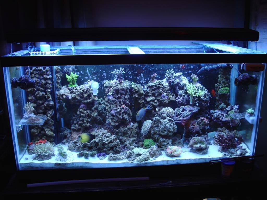 90 Gallon Glass Aquarium