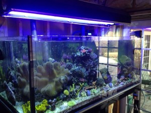 All Glass Aquarium Company