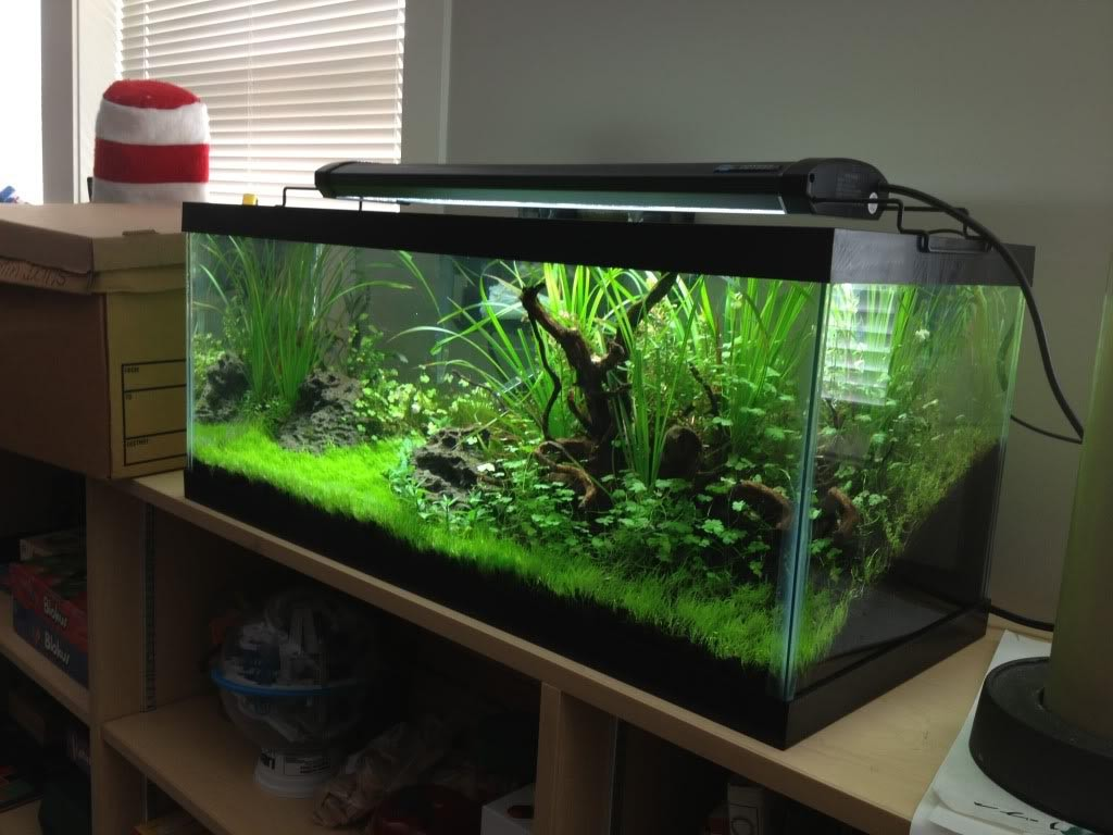 Aquarium 30 Gallon Long