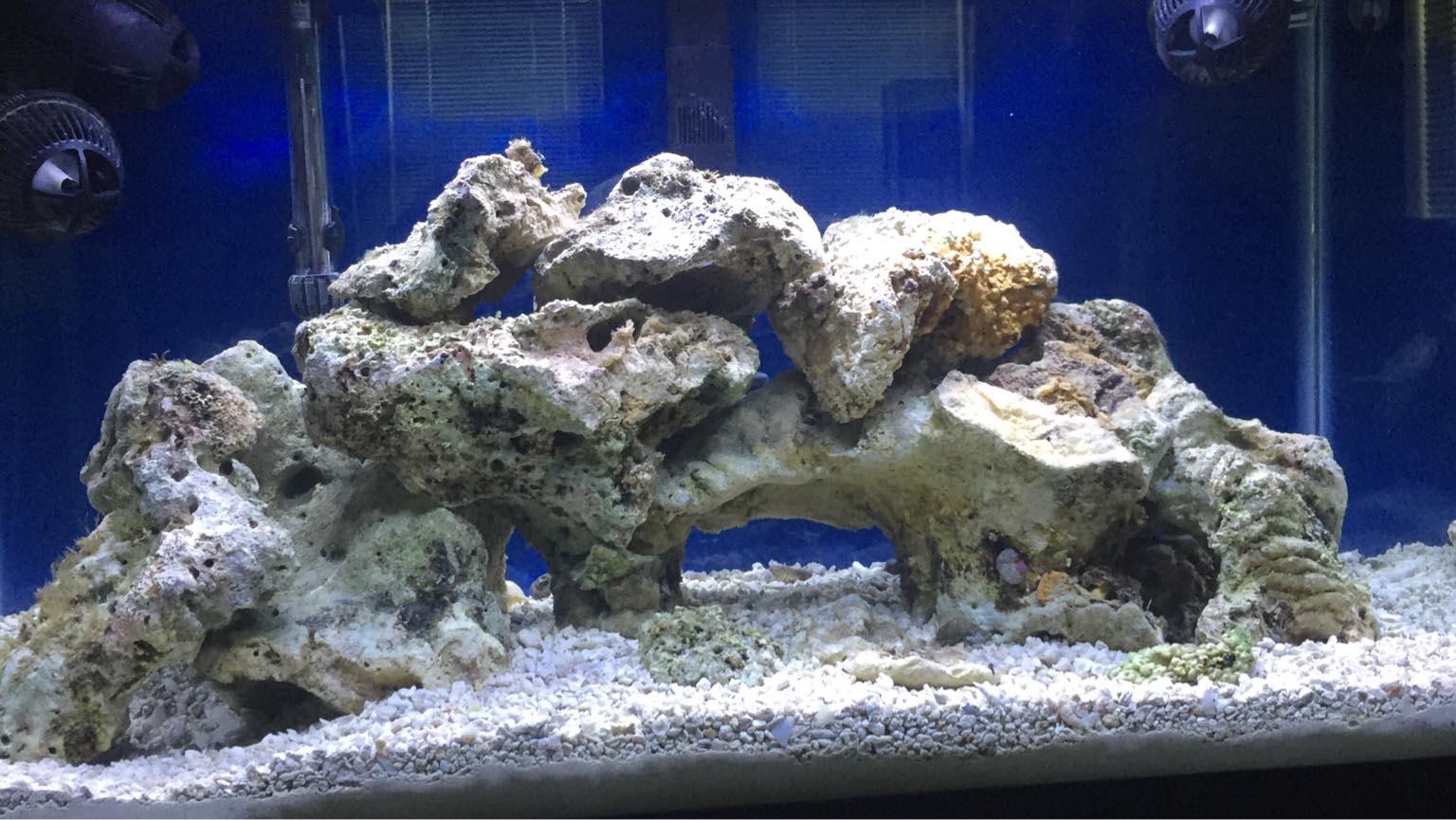 Aquarium and Coral Reef Organization of Sarasota