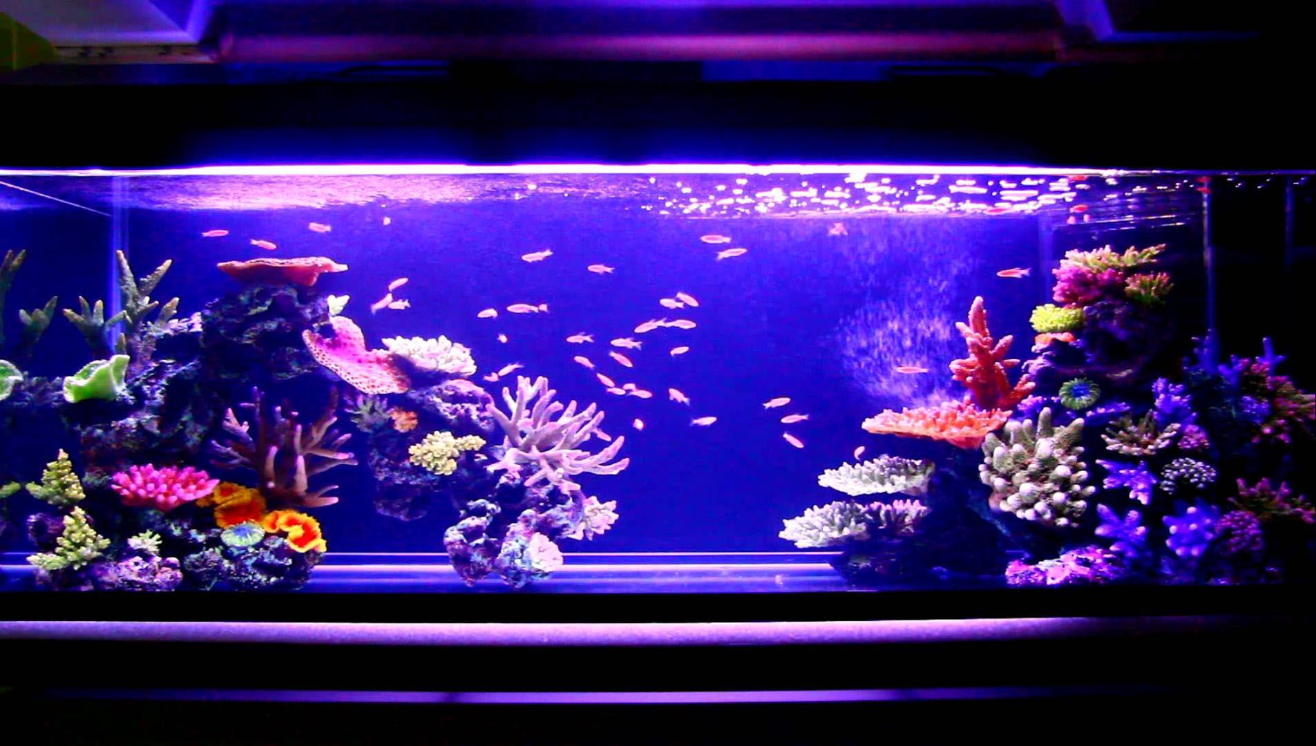 Aquarium Artificial Coral Reef Aquarium Design Ideas