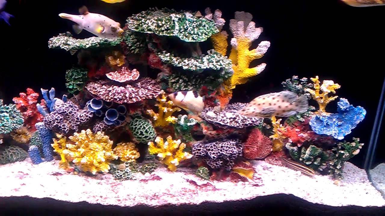 aquarium coral reef decor aquarium design ideas. Black Bedroom Furniture Sets. Home Design Ideas