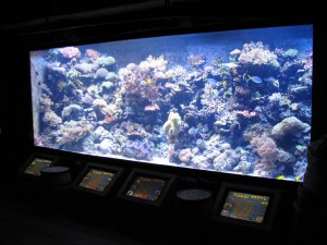 Aquarium Coral Reef Exhibits