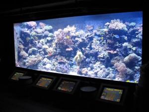 Aquarium Coral Reef Exhibits