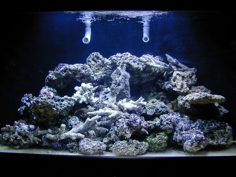 Aquarium Coral Reef Guide