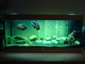 Aquarium Decoration for Oscar Fish