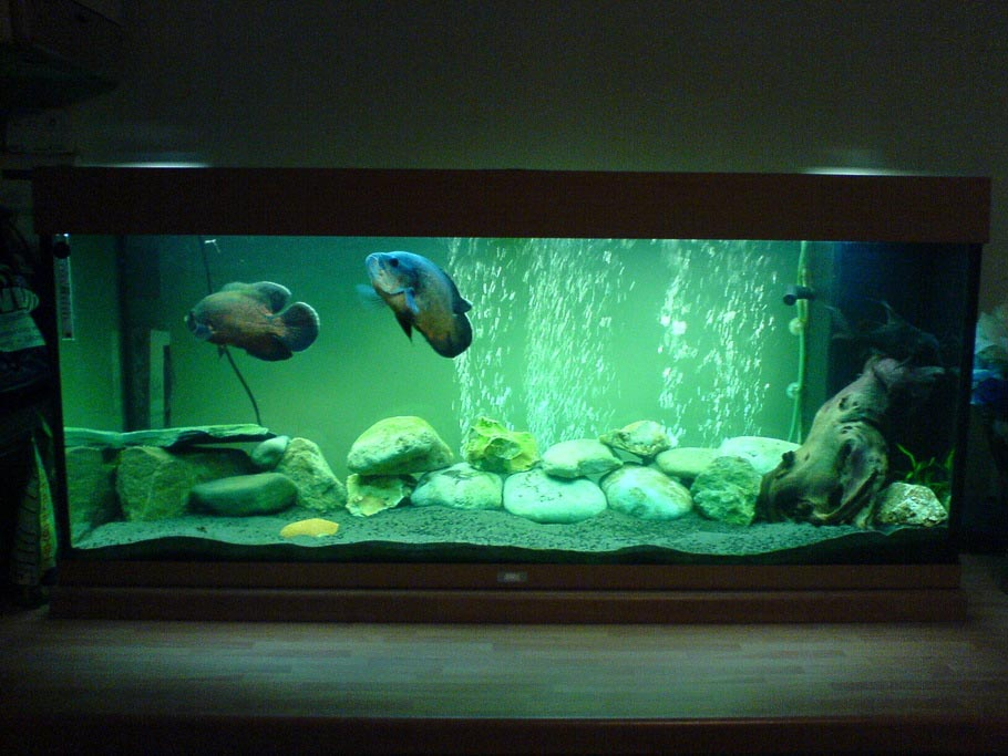Aquarium decoration for oscar fish aquarium design ideas for Aquarium decoration idea